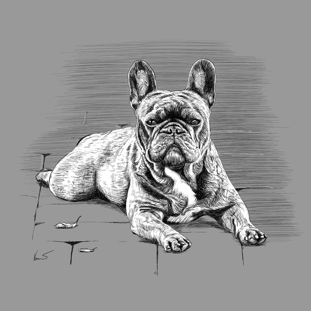 Kresba Francouzský buldoček